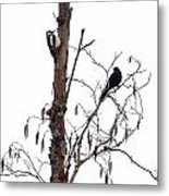 Great Spotted Woodpecker And A Blackbird. Dude What Are You Doing Metal Print