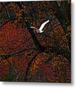 Great White Egret - Autumn Flight Metal Print