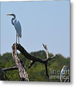 Great White Egret And Friend Metal Print