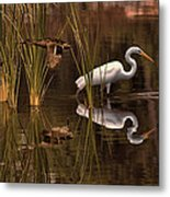 Great White Egret And Mallard Flight Sunrise Reflection Metal Print