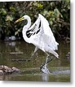 Great White Egret And Turtle Friends1 Metal Print