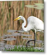 Great White Egret By The River Too Metal Print