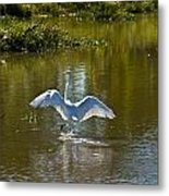 Great White Egret In Sunlight Metal Print