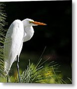 Great White Egret In The Tree Metal Print