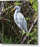 Great White Egret In The Wild Metal Print
