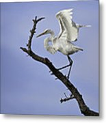 Great White Egret In Tree Metal Print
