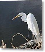 Great White Egret Metal Print