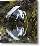 Great White Heron Fishing Metal Print by Charles Warren