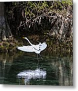 Great White Heron In Flight Metal Print by Charles Warren