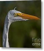 Great White Portrait 2 Metal Print