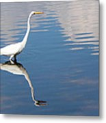 Great White Reflected Metal Print