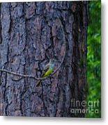 Greater Crested Flycatcher Metal Print