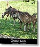 Greater Kudu Metal Print