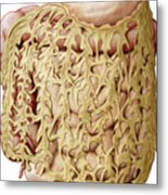 Greater Omentum Metal Print