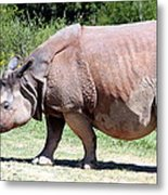Greater One-horned Asian Rhino Metal Print