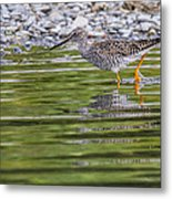 Greater Yellowlegs Metal Print