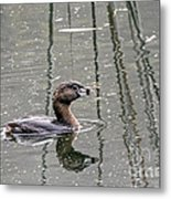 Grebe In The Reeds Metal Print