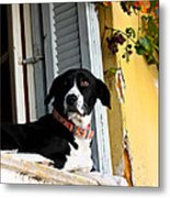 Greek Dog Metal Print
