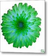 Green And Blue Dahlia Metal Print