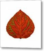 Green And Red Aspen Leaf 3 Metal Print