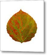 Green And Red Aspen Leaf 5 Metal Print