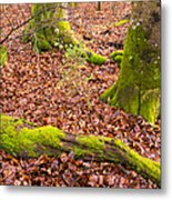 Green And Red Nature In The Forest Metal Print