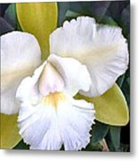 Green And White Cattleya Orchid Metal Print