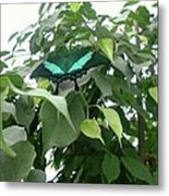 Green Banded Butterfly Metal Print