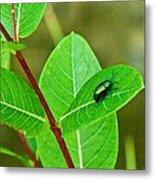 Green Beetle Foraging Metal Print