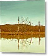 Green Bottom In Winter Metal Print