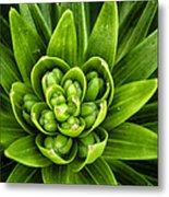 Green Buds Metal Print