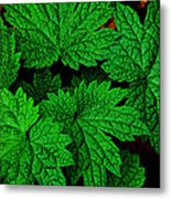 Green Burst Metal Print by James Hammen