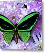 Green Butterfly And Mums Metal Print