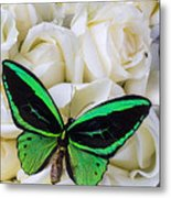 Green Butterfly With White Roses Metal Print