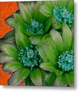 Green Cactus Flowers Metal Print