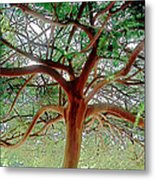 Green Canopy Metal Print by Terry Reynoldson