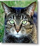 Green Cat Eyes In Summer Grass Metal Print