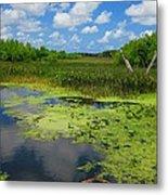 Green Cay Nature Preserve Beauty Metal Print