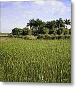 Green Cay Wetlands Metal Print