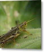 Green Closeup Grasshopper Metal Print
