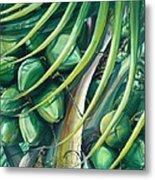 Green Coconuts  2  Metal Print