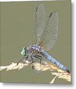 Green Dragonfly Metal Print