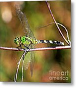Green Dragonfly On Twig Square Metal Print