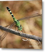 Green Dragonfly Square Metal Print