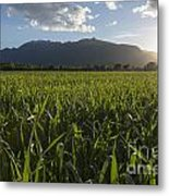 Green Field In Sunset Metal Print