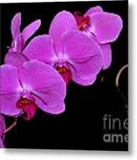 Green Field Sweetheart Orchid No 2 Metal Print