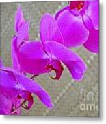 Green Field Sweetheart Orchid No 3 Metal Print