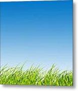 Green Fresh Grass On Blue Sky Panorama. Metal Print