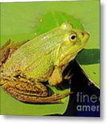 Green Frog 2 Metal Print