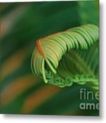 Green Frond  Abstract Metal Print